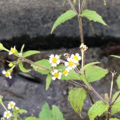 発見/散歩/草花/自然 散歩中に見つけた。花びらの形がかわいい💕…