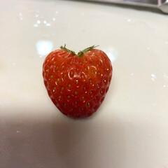 イチゴ♪/自然/発見/暮らし ハート♥️の苺見つけた‼️