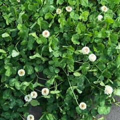 道端/自然/発見/春/花/LIMIAおでかけ部 (1枚目)