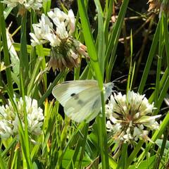 草/散歩/自然/発見/風景 蝶々とまってた。