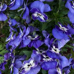発見/花/春/風景 花壇の一角。私が育てたわけではない。