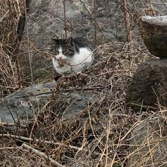 猫/自然/散歩/発見 散歩してたら見つけた。かわいい💕