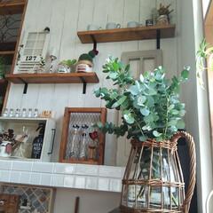 FONTAINE かご編みガラスフラワーベース ピッチャー LYGN1030 YY CR3 SPICE プレゼント かご フラワーベース 花瓶 花びん ガラス瓶(花瓶、花器)を使ったクチコミ「庭のユーカリを飾りました😄 新芽がイキイ…」
