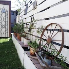 ボーダーフェンス/ガーデニング/植物/車輪/にわ/ガーデン お隣さんとの境界に置いたプランター付きボ…