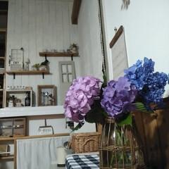 FONTAINE かご編みガラスフラワーベース ピッチャー LYGN1030 YY CR3 SPICE プレゼント かご フラワーベース 花瓶 花びん ガラス瓶(花瓶、花器)を使ったクチコミ「今年は紫陽花のつぼみが少ないみたいけど …」