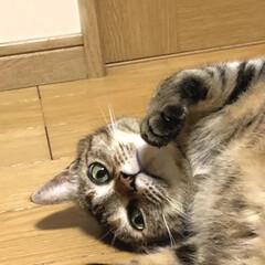 おもしろ猫/猫と暮らす/ペット/にゃんこ同好会 戦闘態勢に入りました😼✨✨(1枚目)