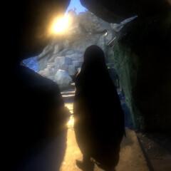 ペンギン/動物園 あけましておめでとうございます✨ 今年も…