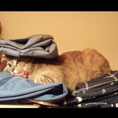 猫/ペット/イタズラ 😾なぜこんな理不尽なことをされるのか心底…(2枚目)