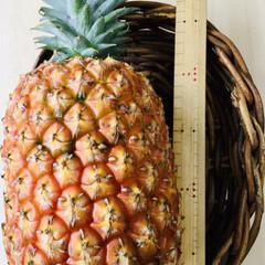 パイナップル/沖縄 頂き物 沖縄産パイナップル‼️🍍 なんと…
