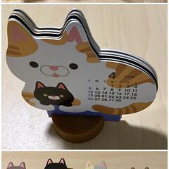 にゃんこ同好会/ネコ/ねこ/猫/ダイソー/100均/... 【DAISO猫カレンダー🗓】 ダイソーで…
