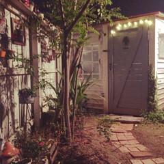 小屋/多肉/ナチュラルガーデン/夜の庭 秋の夜長は虫の声を聴きながら。 小屋の中…