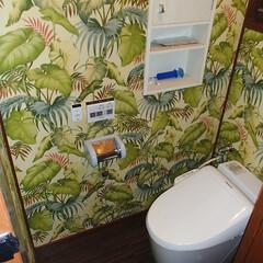トイレ/トイレリフォーム/ウォシュレット/Panasonic/パナソニック/アラウーノ/... 東京都葛飾区のトイレリフォーム事例です。…