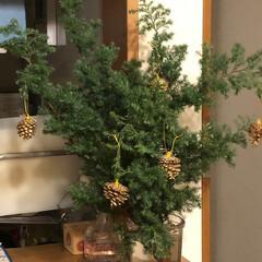 クリスマスツリー (1枚目)