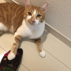 かわいい/ペット/猫 足の上に手をおいているひまわり🌻 この顔…