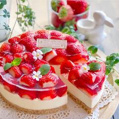 いちごスイーツ/お菓子作り/ケーキ/手作りケーキ/手作りおやつ/苺のレアチーズケーキ/... 本格苺のレアチーズケーキ🍓🎂  レアチー…