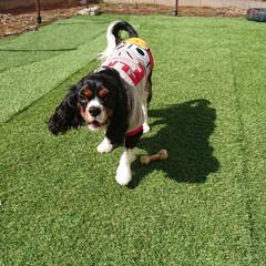 ドッグラン/LIMIAペット同好会/フォロー大歓迎/ペット/ペット仲間募集/犬/... 今日は、雪もなくポカポカと、暖かいから、…