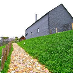 建築/住まい/シンプル住宅/建築デザイン/注文住宅/暮らしを楽しむ/... アプローチにクローバーを植えました。(1枚目)