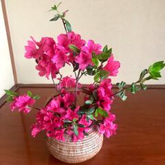 生け花/茶道/お稽古/手作り/和菓子 今日は週に一度の茶道🍵のお稽古😊  お花…