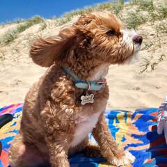 お散歩/ビーチ/海/HERO🐶くん/ペット/犬 たっだいま〜🐶  平日の昼間ですが、結構…