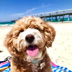 変顔🤪/ウォータードラゴン/ブッシュターキー/海水浴/おさんぽ/おでかけ/... 昨日はお天気がヨカッタのでビーチへ 🌴⛱…