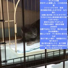 ネコ好き/猫大好き/猫屋敷/猫好き/保護猫 (3枚目)