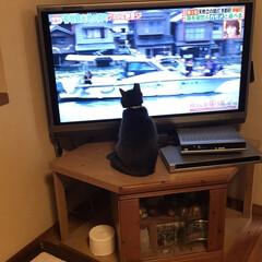 猫大好き/ネコ好き/保護猫/猫好き/猫屋敷 (2枚目)