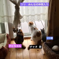 猫好き/猫屋敷/猫大好き/保護猫/ネコ好き