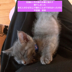 保護猫/ネコ好き/猫大好き/猫屋敷/猫好き
