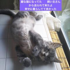 ネコ好き/猫大好き/猫屋敷/猫好き/保護猫