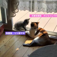 猫好き/猫屋敷/猫大好き/ネコ好き/保護猫
