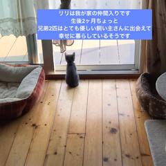猫好き/猫屋敷/猫大好き/ネコ好き/保護猫 (4枚目)