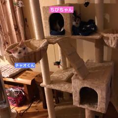 猫屋敷 (2枚目)