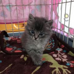 保護猫/ネコ好き/猫屋敷/猫大好き 保護猫 保護猫カフェやりたいね 笑笑 今…