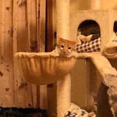 猫大好き 保護猫 メイちゃん あいちゃん こんなに…(2枚目)
