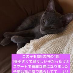 ネコ好き/猫大好き/猫屋敷/猫好き/保護猫 (2枚目)