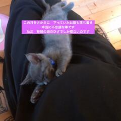 保護猫/ネコ好き/猫大好き/猫屋敷/猫好き (3枚目)