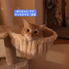 猫大好き/ネコ好き/猫屋敷/猫好き