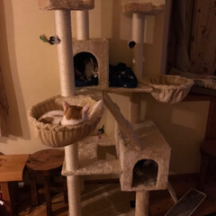猫屋敷 (1枚目)