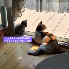 猫好き/猫屋敷/猫大好き/ネコ好き/保護猫 (2枚目)