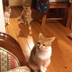 猫大好き 保護猫 メイちゃん あいちゃん こんなに…(3枚目)