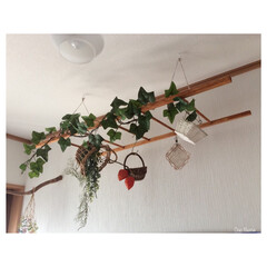 ラダー/DIY/100均/天井/吊るす/フェイクグリーン/... ラダー作りました😊