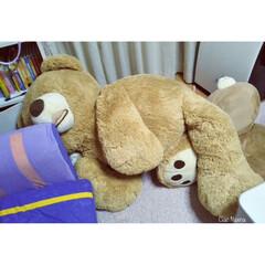 コストコベア/くま/ぬいぐるみ/大きい/面白い/可愛い/... お父さん!!  棚とソファーの狭間で。 …