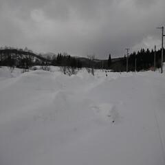 道/除雪/圧雪/遠野物語 居住地から北へ90kmの県内、除雪車両の…