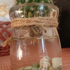 水栽培/サボテン わずか1日で伸びる根っこ。