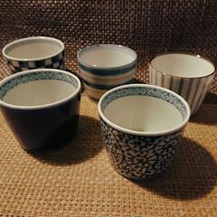 猪口/波佐見焼/バーナードリーチ/スリップウエア コップの代わりに茶碗として猪口をおろす。…