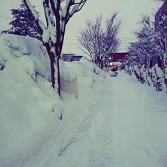 雪景色/雪国 積雪46cm、諦念。