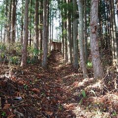 熊野神社/神社 行きはよいよい帰りはこわい。 南無散 ク…