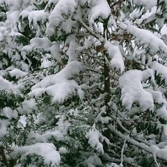 雪景色/山の神 街の目覚めが早くなる雪の日の朝、 窓から…