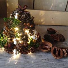 クリスマス/コンテスト/ミニツリー/木の実/自然/セリア/... 自然の木の実を使って作ったツリーにセリア…