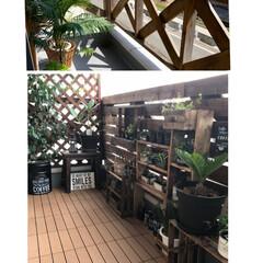 ベランダガーデン/男前/観葉植物/柵DIY/1×4材/ラティスフェンス/... ベランダを大改造しました!